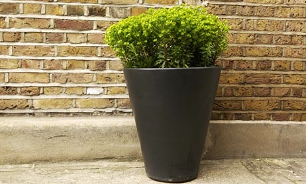 moving-with-pot-plants